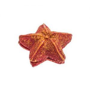 AQUAEL Czyścik Magnetyczny Rozgwiazda