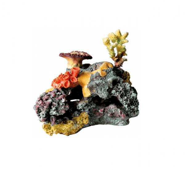 Trixie Rafa koralowa